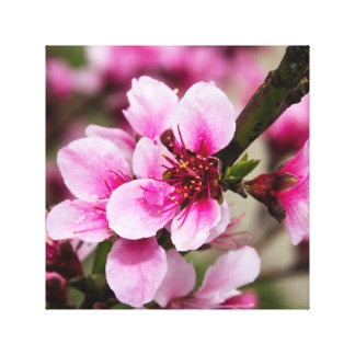 桜 キャンバスプリント