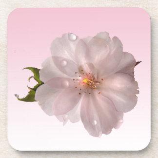 桜 コースター