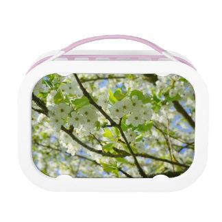 桜 ランチボックス