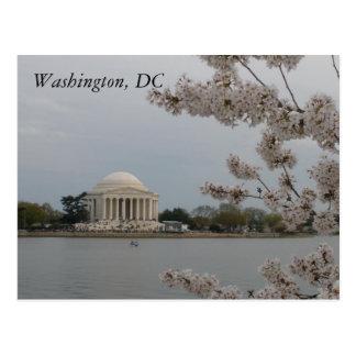 桜: ワシントンD.C.、D.C. Postcard ポストカード