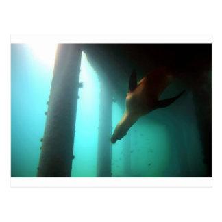 桟橋の下で水中に泳いでいるアシカ ポストカード