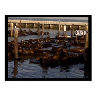 桟橋69のサンフランシスコの郵便はがき 葉書き