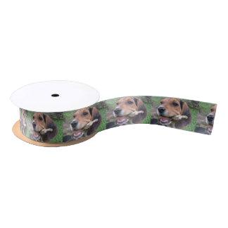 棒のリボンでかみ砕いているかわいいビーグル犬の子犬 サテンリボン