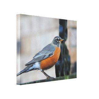 棚の鳥の写真のロビン キャンバスプリント