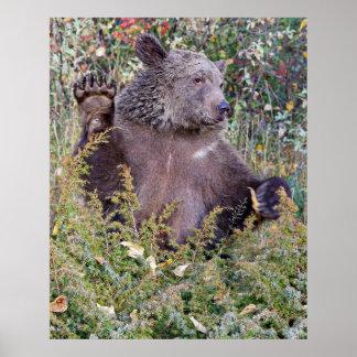 森で振っている灰色グマ ポスター