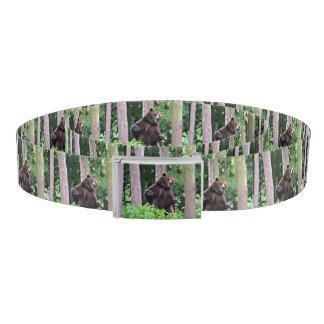 森で高く立っている灰色グマ ベルト