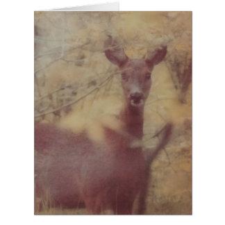 森のシカ ビッググリーティーングカード