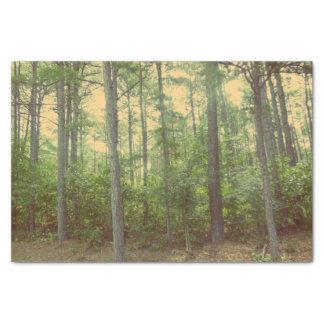 森のティッシュペーパーの歩行 薄葉紙