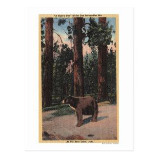 森のヒグマ ポストカード