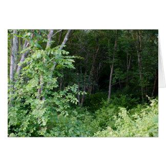 森の挨拶状の写真 カード
