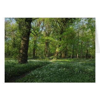 森の春、ビュート公園、カーディフ カード