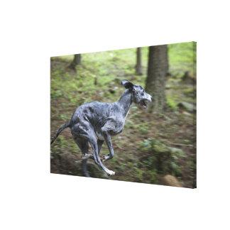 森の犬のランニング キャンバスプリント