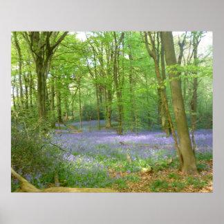 森のBluebells ポスター