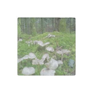 森林きのこ ストーンマグネット