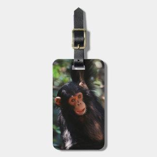 森林でつるしている若いチンパンジー ラゲッジタグ