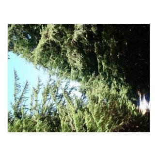 森林に覆われた道のMoranの州立公園 ポストカード