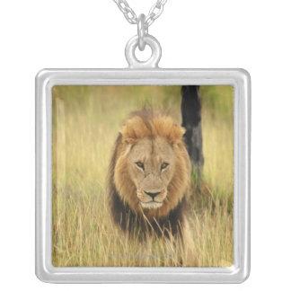 森林のライオン(ヒョウ属レオ)の歩く、 シルバープレートネックレス