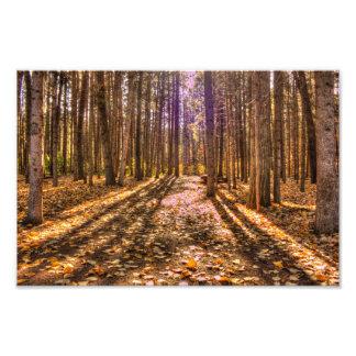 森林のライト フォトプリント