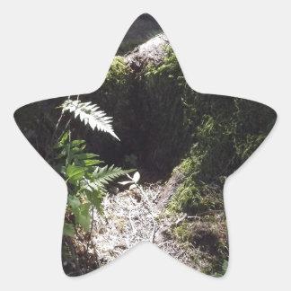 森林のライト 星型シール