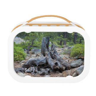 森林の乾燥された木の幹