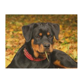 森林の地面にあっているロットワイラーの子犬 ウッドウォールアート