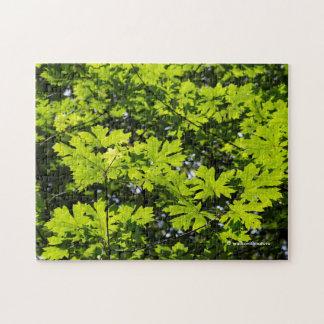 森林の太陽まだらにされた葉 ジグソーパズル