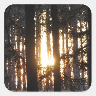 森林の日没 スクエアシール