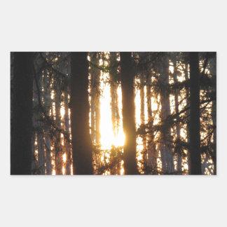 森林の日没 長方形シール
