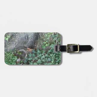森林の木の幹そしてキヅタ ラゲッジタグ