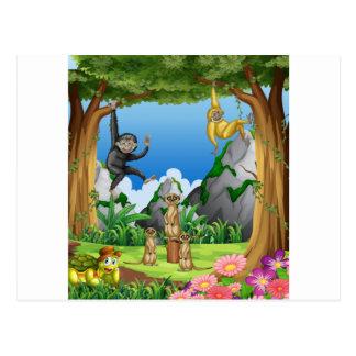 森林の猿そしてmeerkats ポストカード