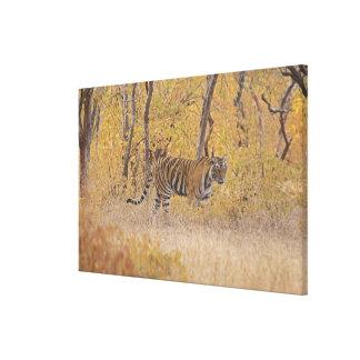 森林の王室のなベンガルトラ、Ranthambhor キャンバスプリント