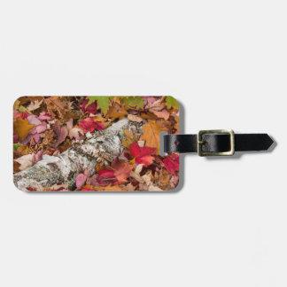 森林の秋のかえでの葉カバー樺の木吠え声 ラゲッジタグ