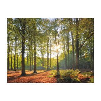森林の秋の太陽 キャンバスプリント