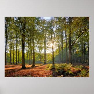 森林の秋の太陽 ポスター