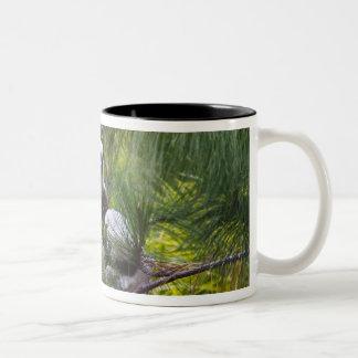 森林のCoquerelのSifaka ツートーンマグカップ