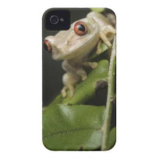 森林アマガエル(Leptopelisの閉めて下さい Case-Mate iPhone 4 ケース