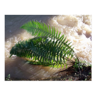 森林シダおよび洪水 ポストカード
