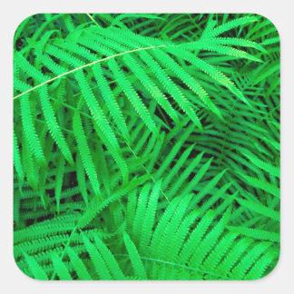 森林ハンモックのFatchafalaya盆地ルイジアナ スクエアシール