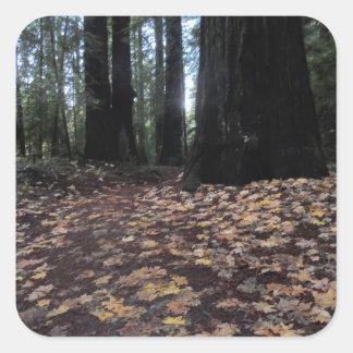 森林フンボルトのレッドウッドの紅葉 スクエアシール