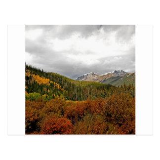 森林ブッシュ山スコットランド ポストカード