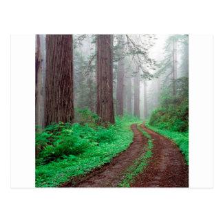 森林レッドウッド ポストカード