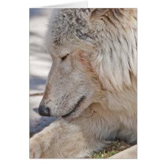 森林北極オオカミの挨拶状 カード