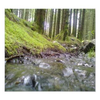 森林及び水 フォトプリント
