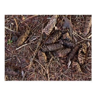 森林床のPineconesそしてマツ針 ポストカード