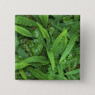 森林床、Quinaultの熱帯雨林、オリンピックNP、 5.1cm 正方形バッジ
