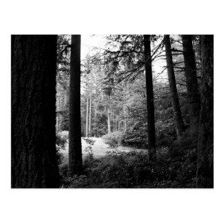 森林暗闇の郵便はがきからのモノクロレリーフ、浮き彫り ポストカード