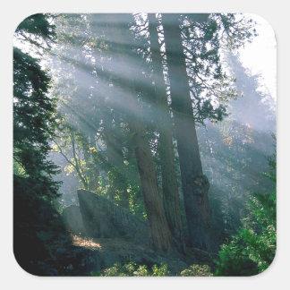 森林森の驚異 スクエアシール