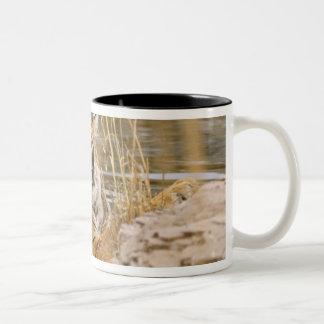 森林池の王室のなベンガルトラ、 ツートーンマグカップ
