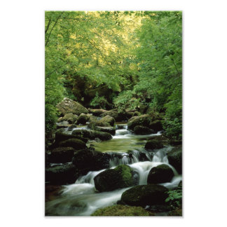 森林流れの写真の印画 フォトプリント