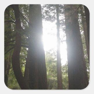 森林美しい スクエアシール